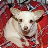 Adopt A Pet :: Wuvikins - Brooksville, FL