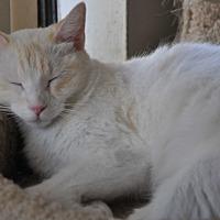 Adopt A Pet :: London - Palmdale, CA