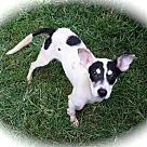 Adopt A Pet :: Morgana