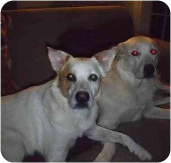 Pensacola, FL - Australian Cattle Dog  Meet Max a Pet for Adoption