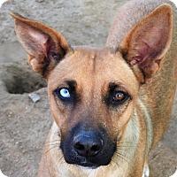 Adopt A Pet :: Azure - San Diego, CA