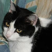 Adopt A Pet :: Koo - Washington, VA