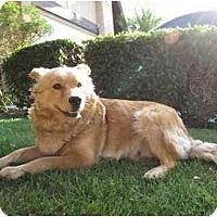 Adopt A Pet :: Sadie - Riverside, CA