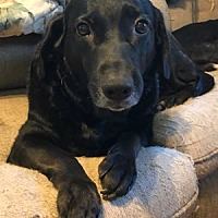 Adopt A Pet :: Sammy - Hudson, NY