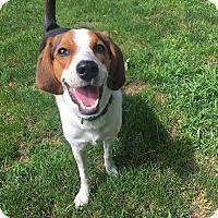 Adopt A Pet :: Sybil - Newtown, CT