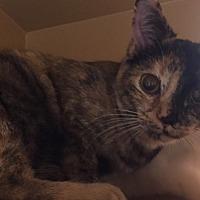 Adopt A Pet :: Princess - Morganton, NC