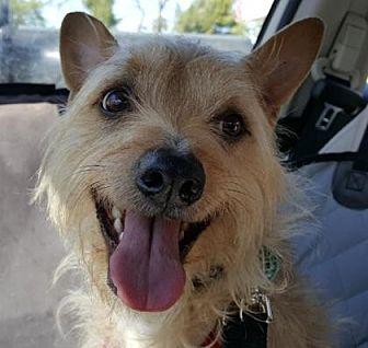 Az Small Dog Rescue Surrender