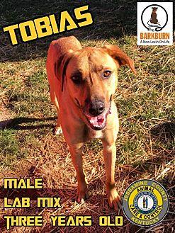 Adopt A Pet :: Tobias  - Nicholasville, KY