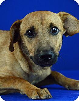 Lafayette Louisiana Dog Adoption