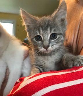 Adopt A Pet :: Kiera  - Devon, PA