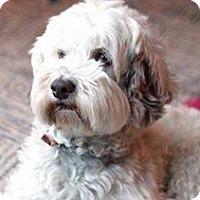 Adopt A Pet :: Baxter - Minneapolis, MN