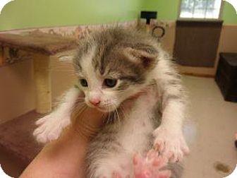Adopt A Pet :: Lena  - Princeton, WV