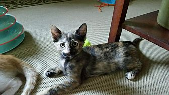 Sootie  *ADOPTED!