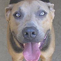 Adopt A Pet :: Reese - Cross Roads, TX