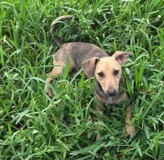 Pet Adoption West Palm Beach Florida