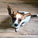 Adopt A Pet :: Reggie