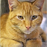 Adopt A Pet :: Fagan - Huntington, NY