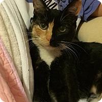 Adopt A Pet :: Opi - Ogallala, NE