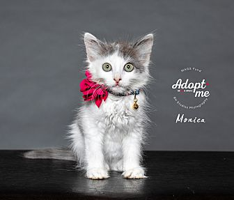 Adopt A Pet :: Monica  - Houston, TX