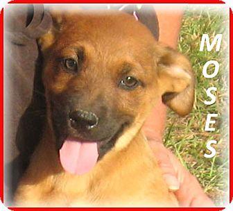 Massachusetts Adoption Dog