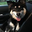 Adopt A Pet :: Casey *Adopt*
