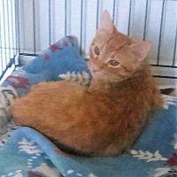 Adopt A Pet :: Liam - Burgaw, NC