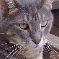 Adopt A Pet :: Tigger - Brooklyn, NY