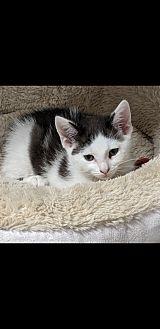 Carter *Adopted!*