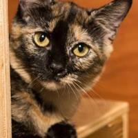 Adopt A Pet :: Beatrix - Santa Fe, TX