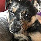 Adopt A Pet :: Mykahlua