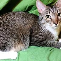 Adopt A Pet :: Sassy - Sarasota, FL