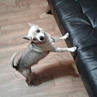 Adopt A Pet :: Dusty - Ardmore, OK