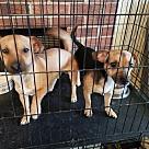 Adopt A Pet :: Chico