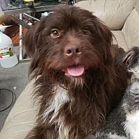 Street Dogs Rescue Portland In Portland Oregon