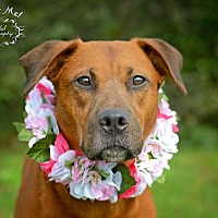 Adopt A Pet :: Barbara Jean - Fort Valley, GA