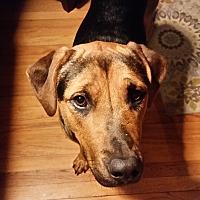 Adopt A Pet :: Zoe-Foster needed! - Detroit, MI