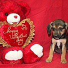 Adopt A Pet :: Sir Lancelot