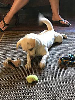 Adopt A Pet :: Sophie  - Renton, WA