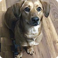 Adopt A Pet :: Guenther - Atlanta, GA