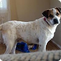 Adopt A Pet :: Alex - Long Beach, CA