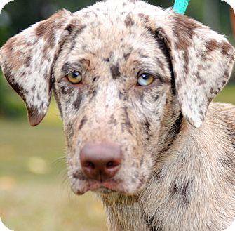 Wakefield Ri Great Dane Meet Ginawow Gorgeous Puppy A Pet