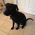 Adopt A Pet :: Ben N Jerry's Ben