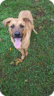 Shepherd (Unknown Type) Mix Dog for adoption in Indianola, Iowa - Angel