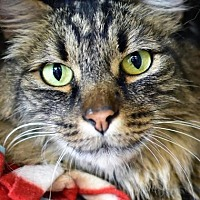 Adopt A Pet :: Jayda - Denver, CO