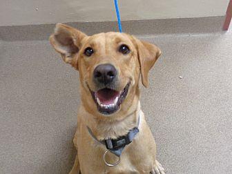 Adopt A Pet :: 19-0626  - Laramie, WY