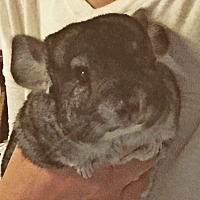 Adopt A Pet :: Chuck & Mylo - MA - Granby, CT
