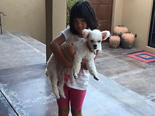 Vancouver Bc Miniature Poodle Meet Lana I Dont Shed
