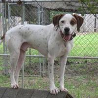 Adopt A Pet :: Bones - Hopkins, SC
