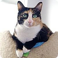 Adopt A Pet :: Missy Meek - Houston, TX