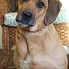 Adopt A Pet :: Dory